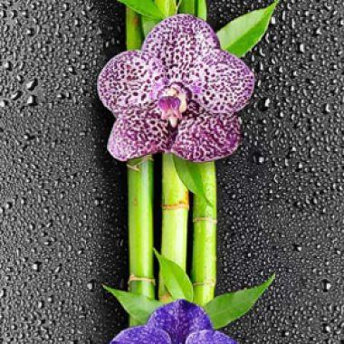 1-351 Орхидея